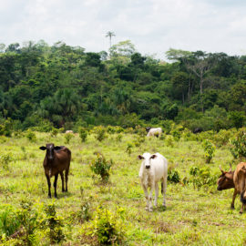 Deforestation in the Amazon (Brazil) can be indirectly linked to the leather industry through and expansion in cattle ranching and is a key environmental challenge.