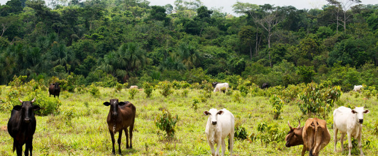 How does Deforestation in Brazil Present an Environmental Risk to the Leather Industry?