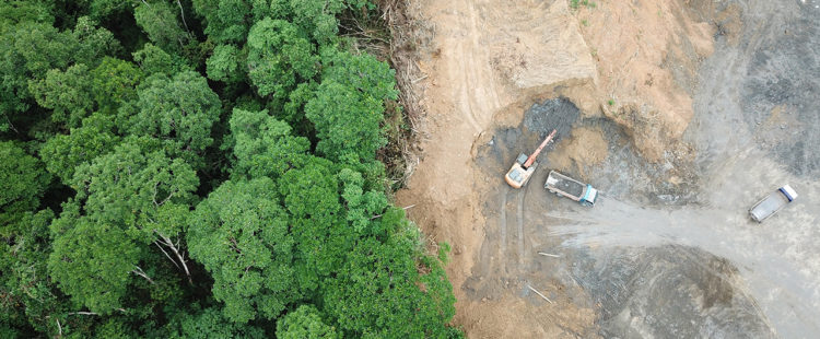 Deforestation: Do you know if your business is sourcing 'forest risk commodities'?
